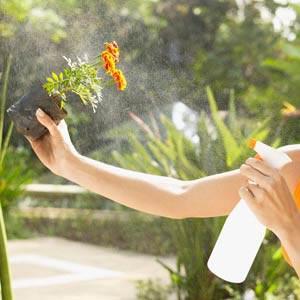 Njega sobnih biljaka - vlažnost vazduha,orošavanje.. Orosav10