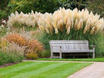 Ukrasna trava u vrtovima Pampas10