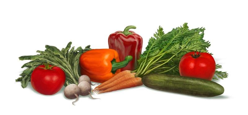 Čaj od komposta je recept za džinovski rast povrća Povrce13