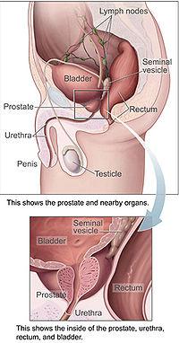 Narodni lijek za prostatu i mokraćne kanale Prosta10