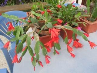 amateurs de cactus et plantes ?  - Page 5 013_6010