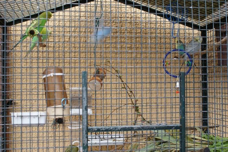 La cage de ma troupe Dsc06021