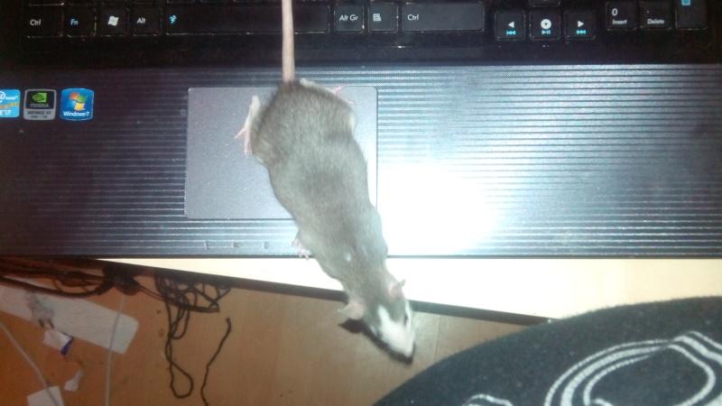 Urgent !!! ma ratte est-elle pleine ????? Img_2012