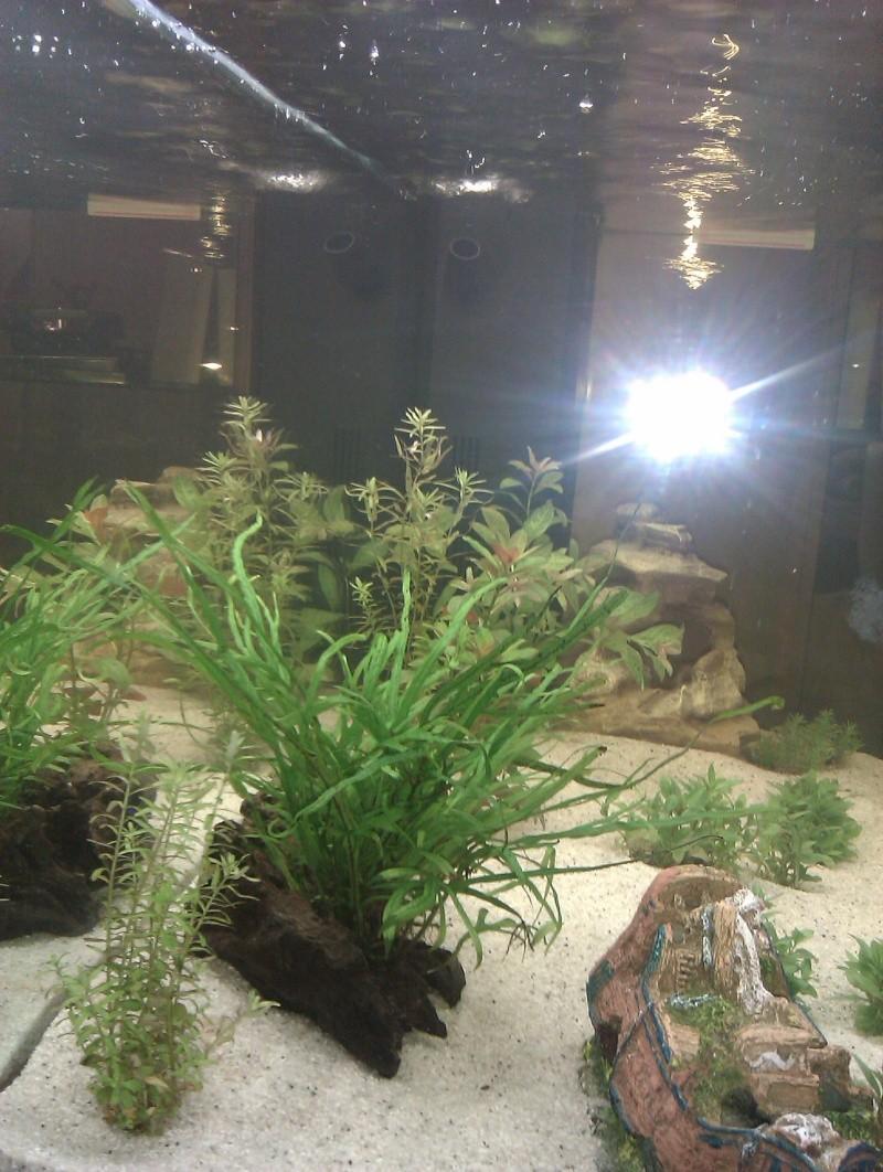 premier aquarium Imag0414