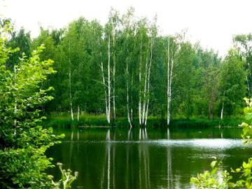 Озеро в березовой роще Bhwju10