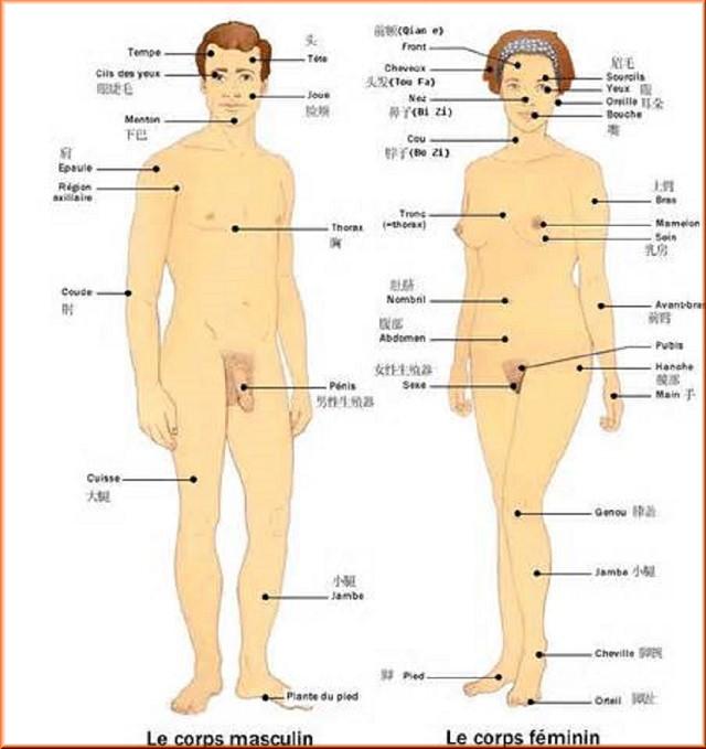 Connaissez vous le corp humain ? Th10