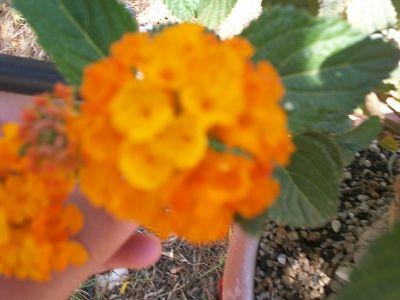 prime fioriture stagionali - Pagina 2 100_2328