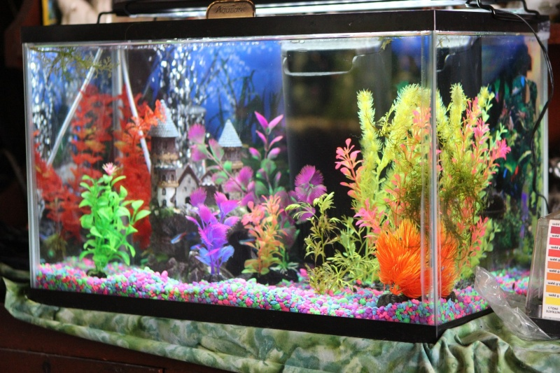 Aquascape DOES make a difference in fish colors! Img_0219