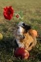 """Апрель 2014 года в Молодежном центре """"Горизонт"""" Img_3111"""