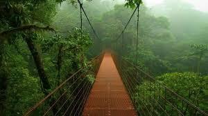 La forêt tropicale ... Mori no Kami guêtte..... Foret_12