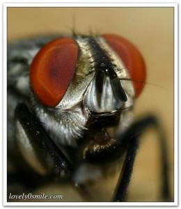 معلومات عن النحل بالصور 8713210