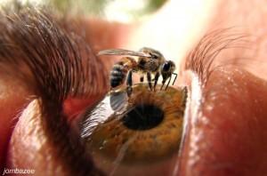 معلومات عن النحل بالصور 8714510