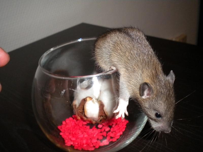 A CLOTURER : Mes toutes premières rattes !  Dscn1412