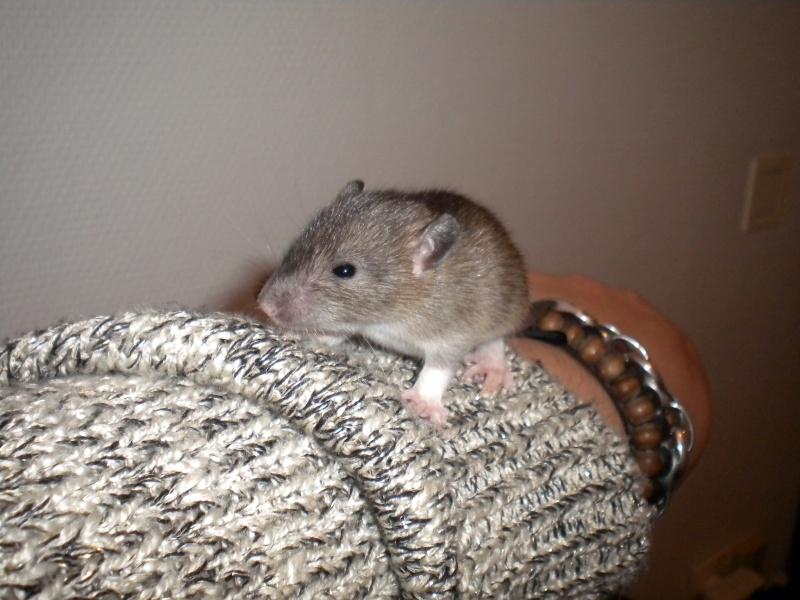 A CLOTURER : Mes toutes premières rattes !  Dscn1414
