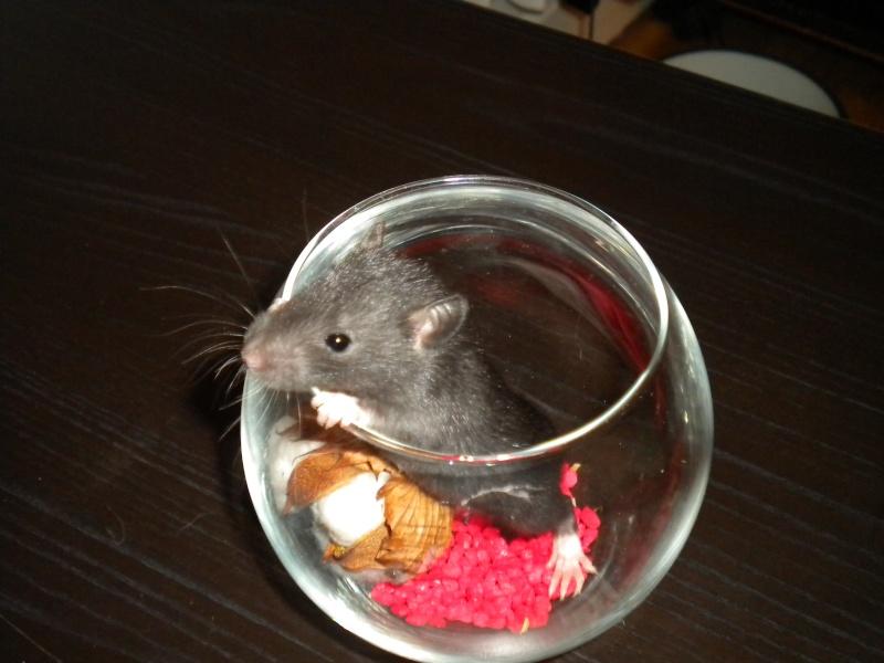 A CLOTURER : Mes toutes premières rattes !  Dscn1423