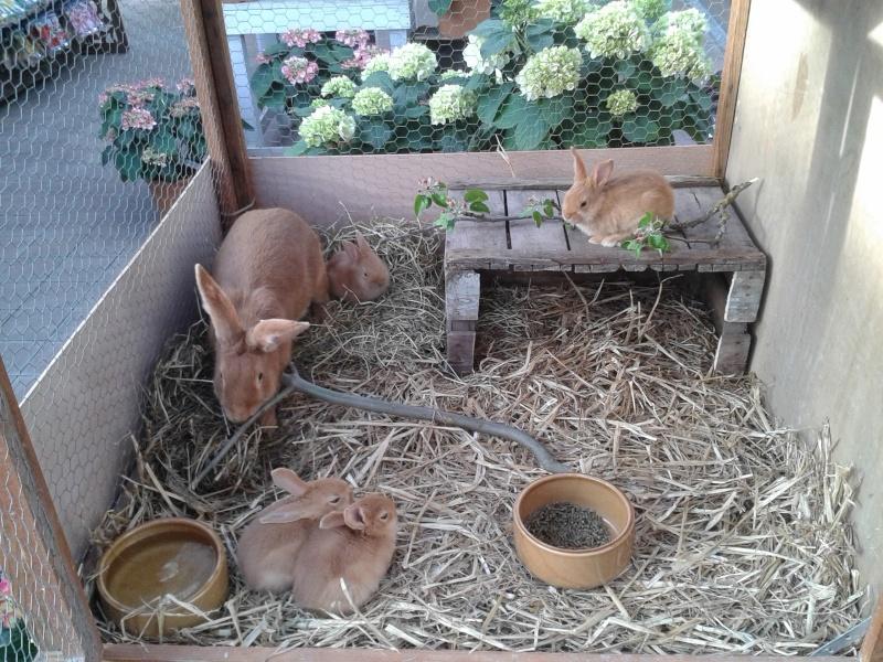 Mon élevage de fauve - Page 2 20140415