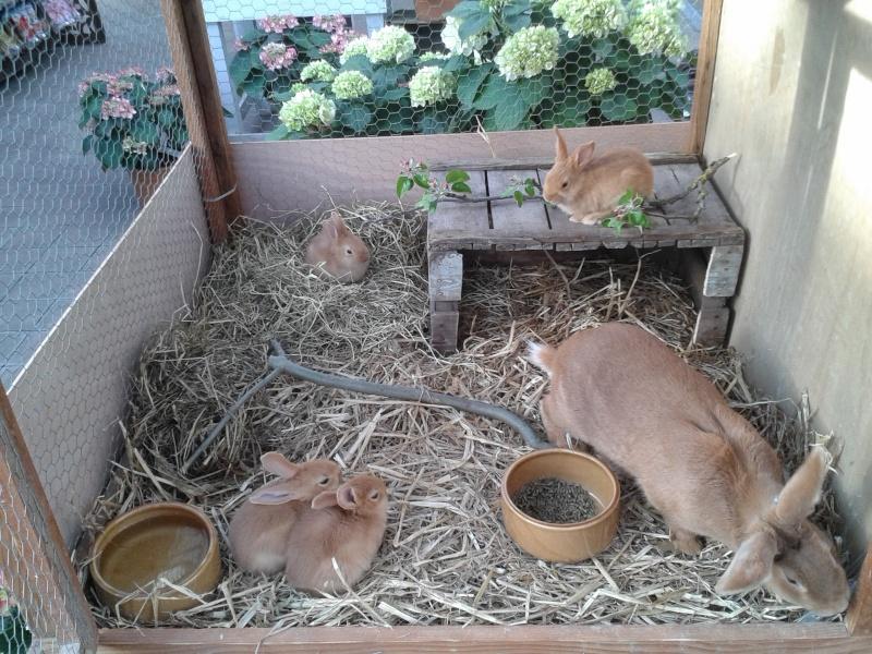 Mon élevage de fauve - Page 2 20140416