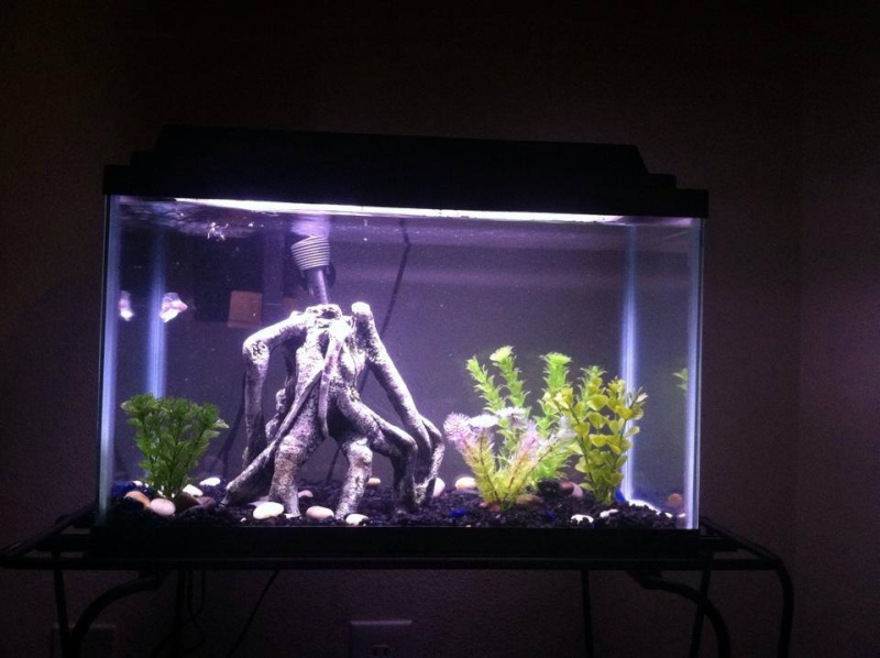New Bettas, need help with making sure their setup is correct! 10gal10