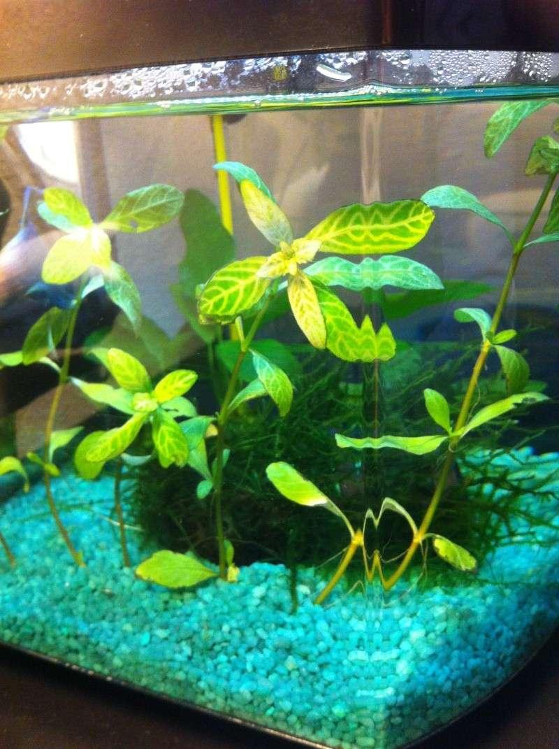 L'aquarium d'Arc-en-ciel EDIT p2 Img_1833