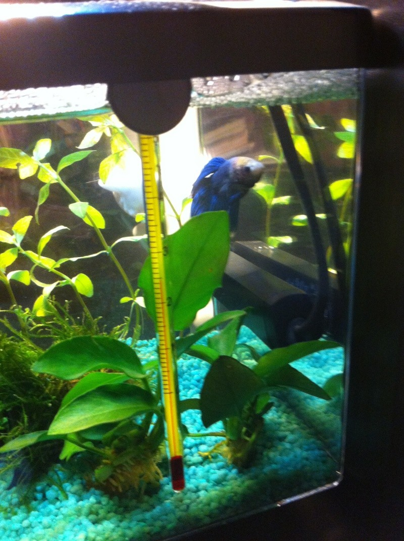 L'aquarium d'Arc-en-ciel EDIT p2 Img_1834
