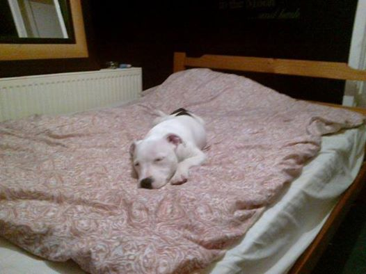 i just lost my bed ! Sleep10