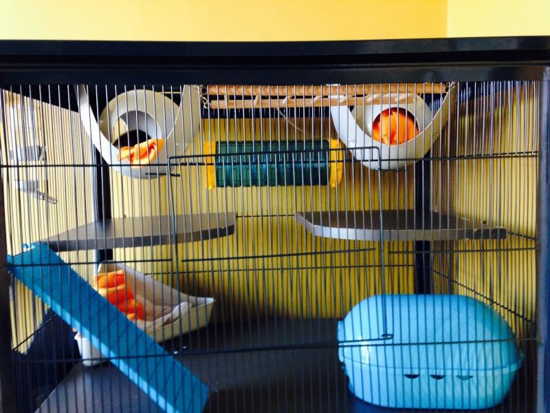 cage des soeurettes Image14