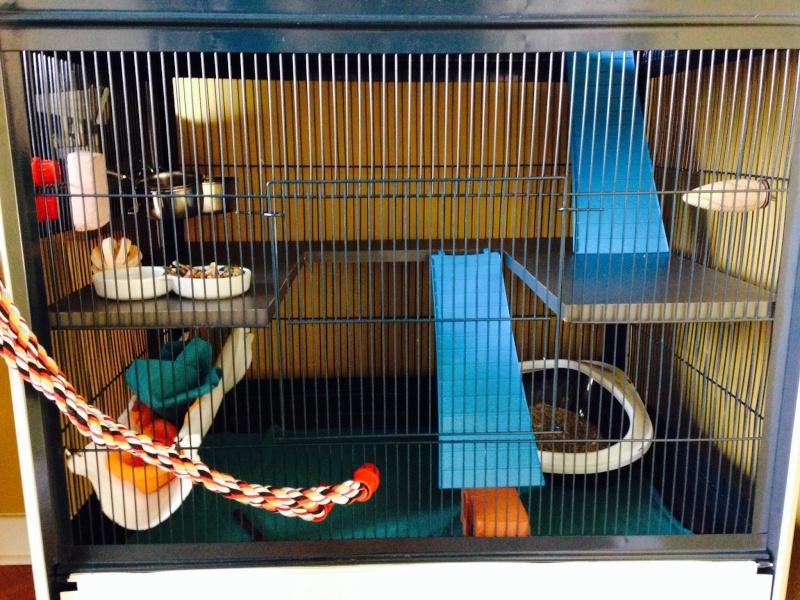 cage des soeurettes Image17