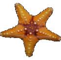Assignment 10b: Photomorph Project due Apr 21 Starfi10