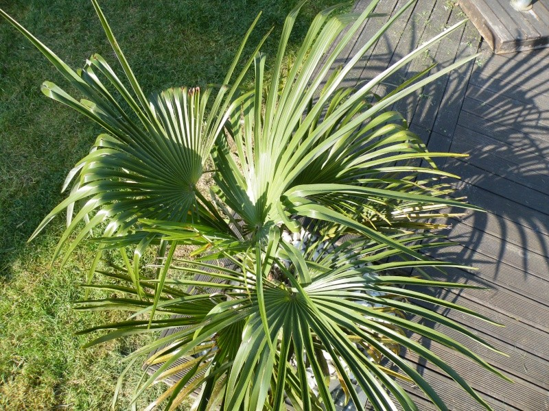 Mon jardin seine et marnais Dscf2915