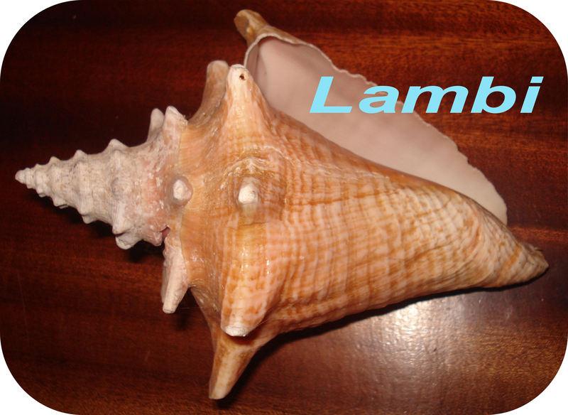 En images... - Page 7 Lambi_12