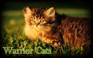 Warrior Cats 43184314