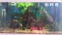 mon premier aquarium 54L Dsc_0610