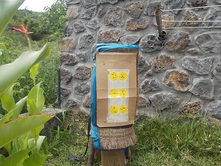 Recyclage vielles pailles Dscn0613