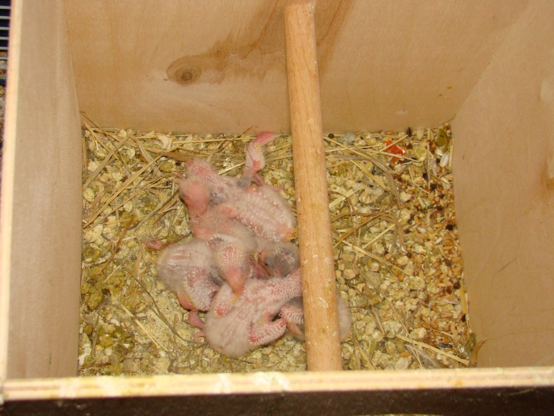 je vous présente les bébés de tipiak et tipiette Dsc03011