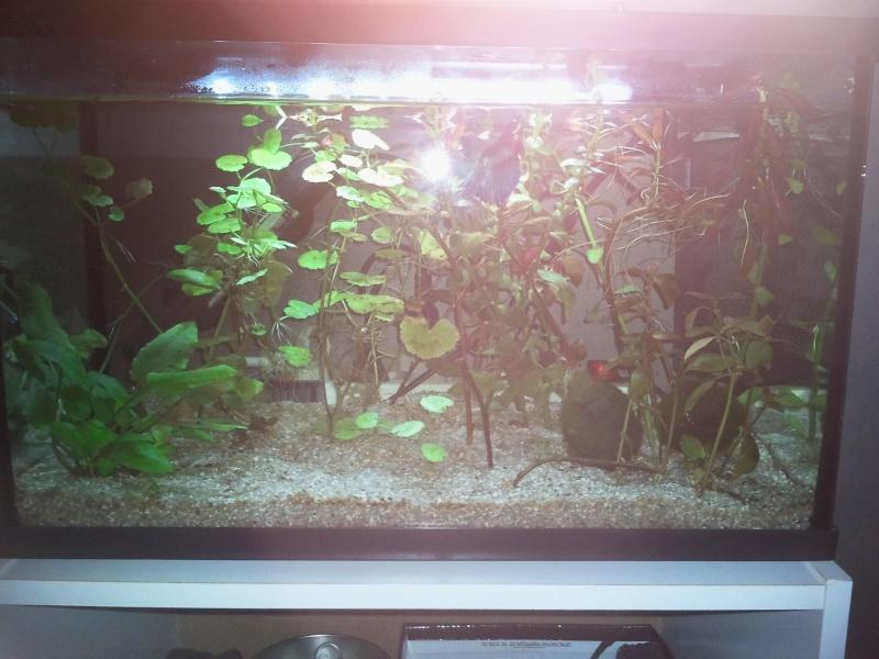 Aquarium mis en eau, peupler et les premiers problemes arrivent Photo010