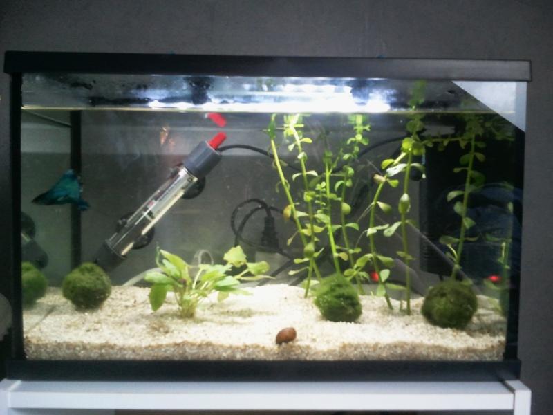 Aquarium mis en eau, peupler et les premiers problemes arrivent Photo011
