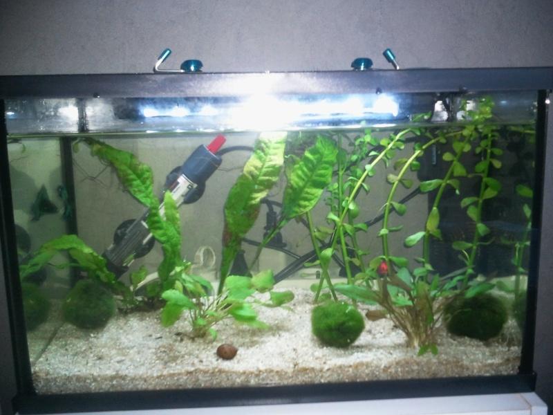 Aquarium mis en eau, peupler et les premiers problemes arrivent Photo012