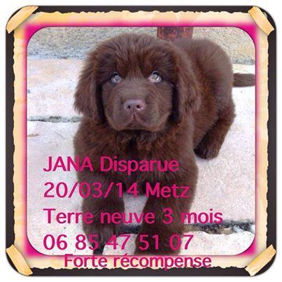 Jana volée à Metz Jana10