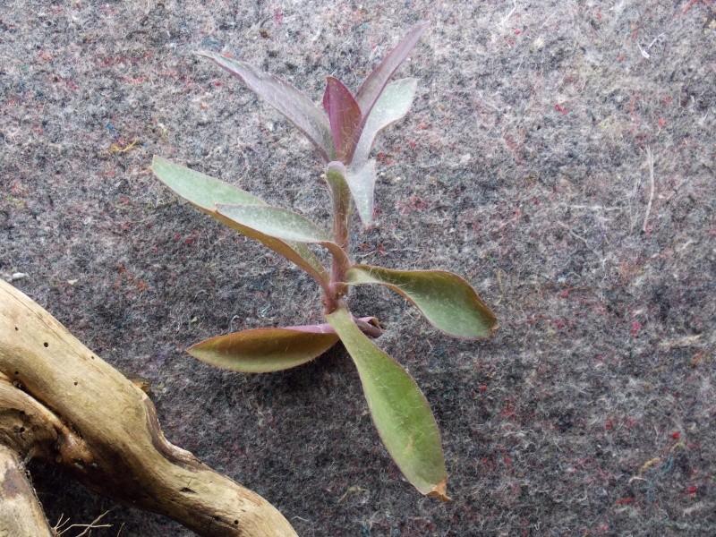disposition des plantes sur mur vegetal - Page 2 Dscn0111
