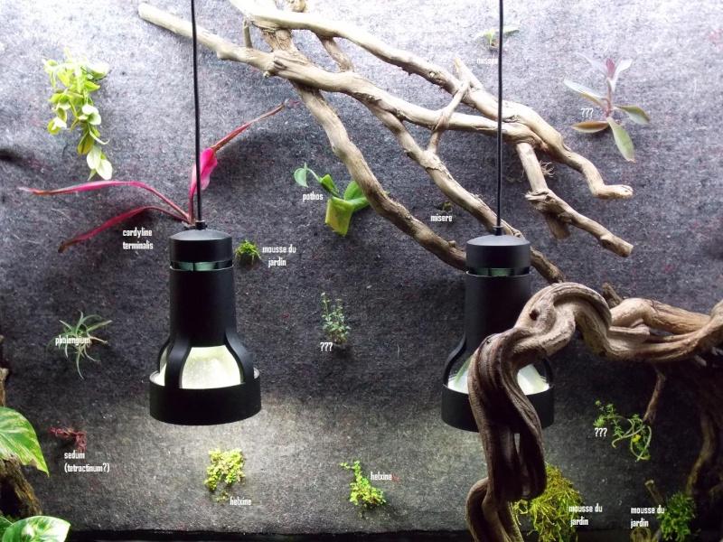 disposition des plantes sur mur vegetal - Page 2 Nom_pl10