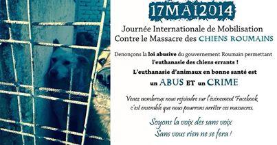 Journée internationale de mobilisation contre le massacre des chiens roumains. 10003911