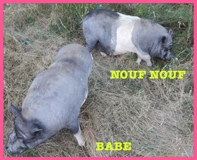 Nouf-Nouf. 10153713
