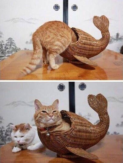 Drôle de poisson d'avril.  16256310