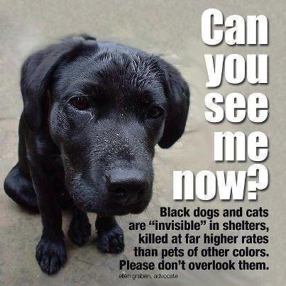 Chats et chiens noirs. 19223210