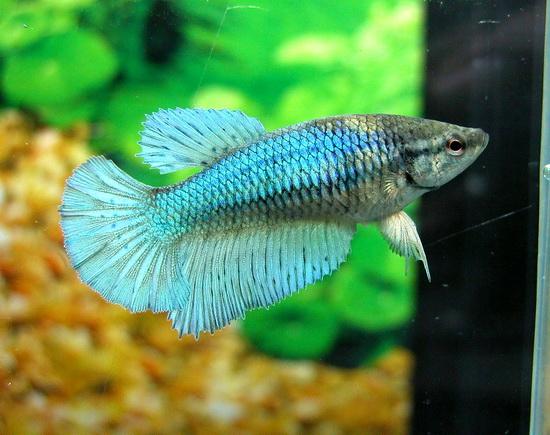Mon aquarium Dscn6110
