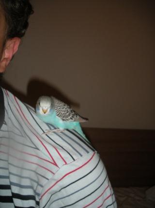 Yoshi, ma petite boule de plumes adorée! - Page 2 Dscn4316