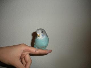 Yoshi, ma petite boule de plumes adorée! - Page 2 Dscn4318