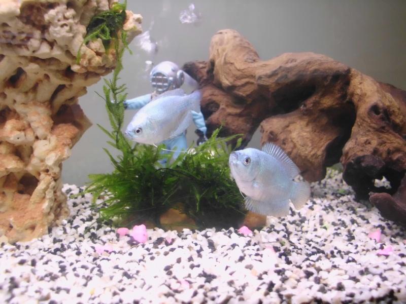 Mon petit aquarium de 120L :) Img_0011