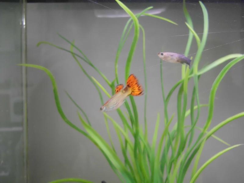 Mon petit aquarium de 120L :) Img_0013