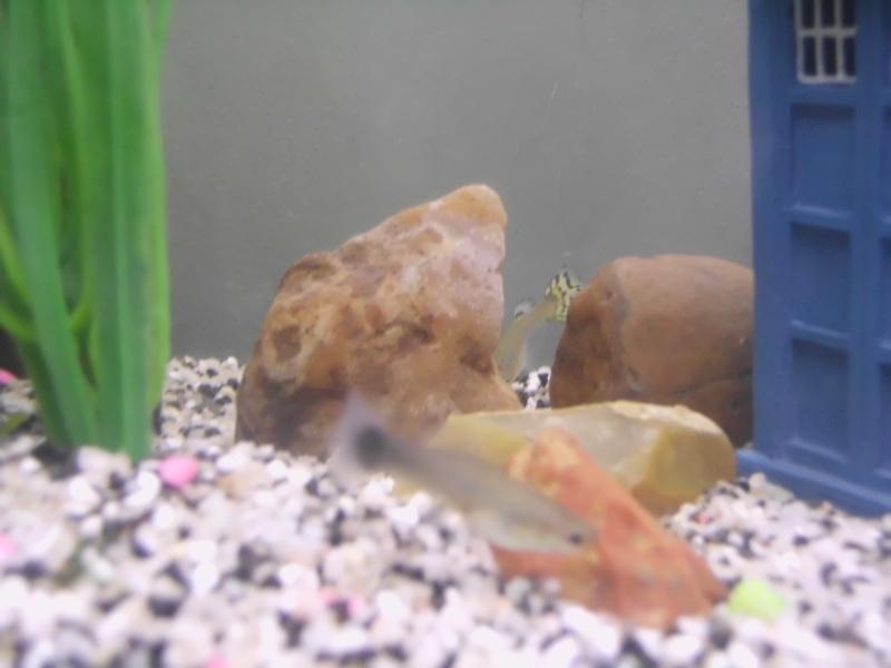 Mon petit aquarium de 120L :) Img_0015